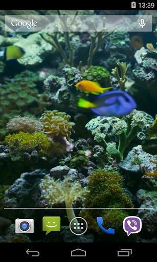 玩免費個人化APP|下載Aquarium Video Live Wallpaper app不用錢|硬是要APP