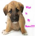 Cute Girl Dog Names App icon