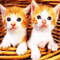 3D cute cat 33