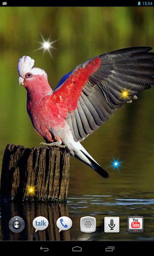 Tropic Parrot live wallpaper