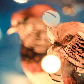 replica bird by Nur Saputra - Animals Birds