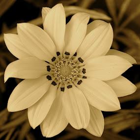 Pretty No Matter What Color by Ed Hanson - Black & White Flowers & Plants ( b&w, close-up, flower )