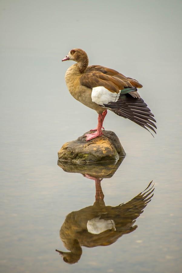 Lonely by Daniel Dan - Animals Birds ( lake, pond, animal )