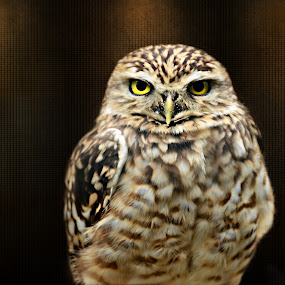 mr grumpy  by Marie Leather - Animals Birds ( prey.captive, birds, eyes,  )