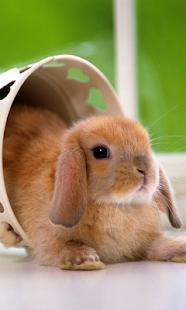 Lovely Rabbit Pet