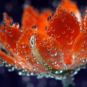 by Jeffrey Sutain - Nature Up Close Flowers - 2011-2013 ( face, photography, closeup, close, up, , color, colors, landscape, portrait, object, filter forge )