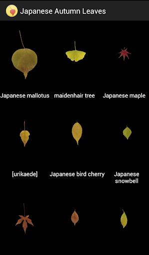 Japanese autumn leaves