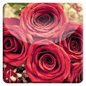 Red Rose HD LiveWallpaper icon