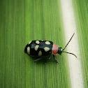 Eight spotted flea beetle