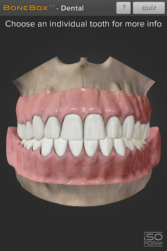 BoneBoxu2122 - Dental Lite  screenshots 1