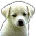Guess the Dog Breed Quiz icon