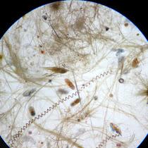 Plankton of Hawaii
