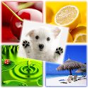PICs QUIZ icon
