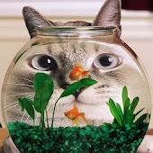 Cat and Fish Wallpapers