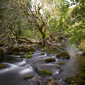 River Afon by Ferdinand Debnárik - Landscapes Forests