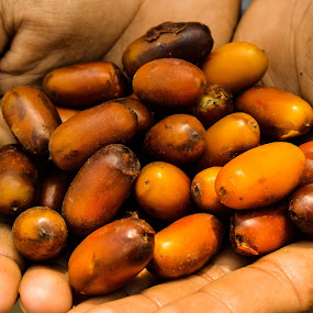 Dates from India !!! by Rushi Chitre - Food & Drink Fruits & Vegetables