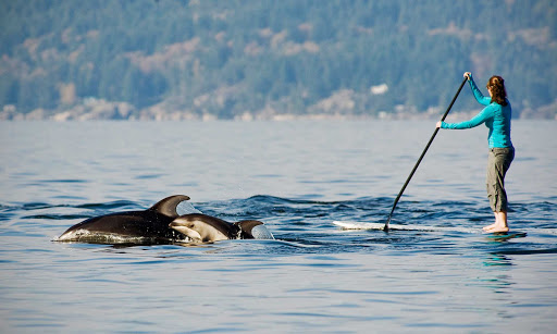 orcas-paddleboard-Howe-Sound-Vancouver-British-Columbia - An experienced stand-up paddle boarder gets a surprise visit from an orca and her baby in Howe Sound, West Vancouver, British Columbia.