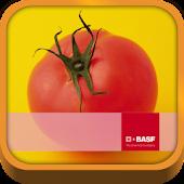 BASF México-Cultivo del Tomate