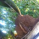 Jamaican termites
