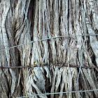 Cedar (Ash Juniper)
