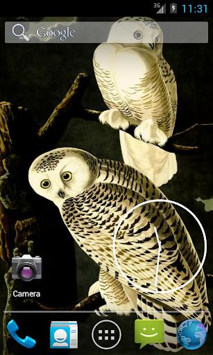 Audubon's OWLS HD+ Wallpaper