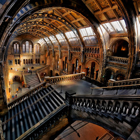 by Richard  Harris - Buildings & Architecture Other Interior ( samyang 14mm f2.8, natural history museum  london england )
