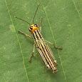 Arthropods of Central America