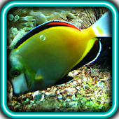 Predators Deep water Fish LWP