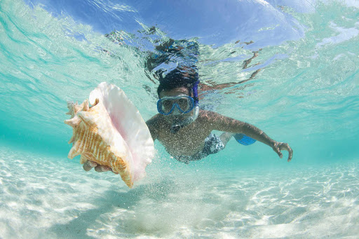 Caribbean-beach-snorkel-seashell - Book passage on Norwegian Cruise Lines and explore the underwater wonders of the Caribbean islands.