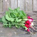 Easter egg radishes