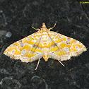 Ommatospila Moth