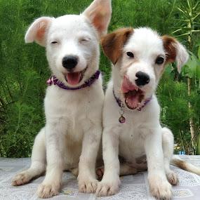 Yin & Yan by Dickson   Shia - Animals - Dogs Puppies (  )