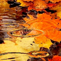 Autumn Ripple Live Wallpaper icon