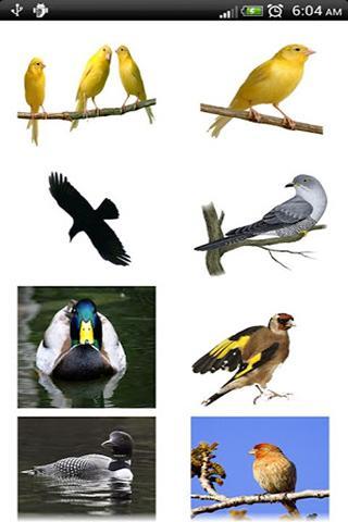 اصوات الطيور- screenshot