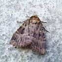 Moth on the balkony