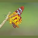 Moth~