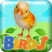 Birds 2048