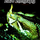 LD50 Photography