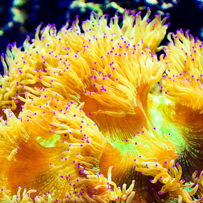 From the coral.. by Reshmid Ramesh - Animals Sea Creatures ( coral, sea creature, creature, sea, animal,  )