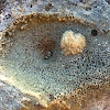 Honeycomb coral fossil