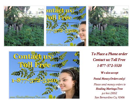 Healing Moringa Tree LLC