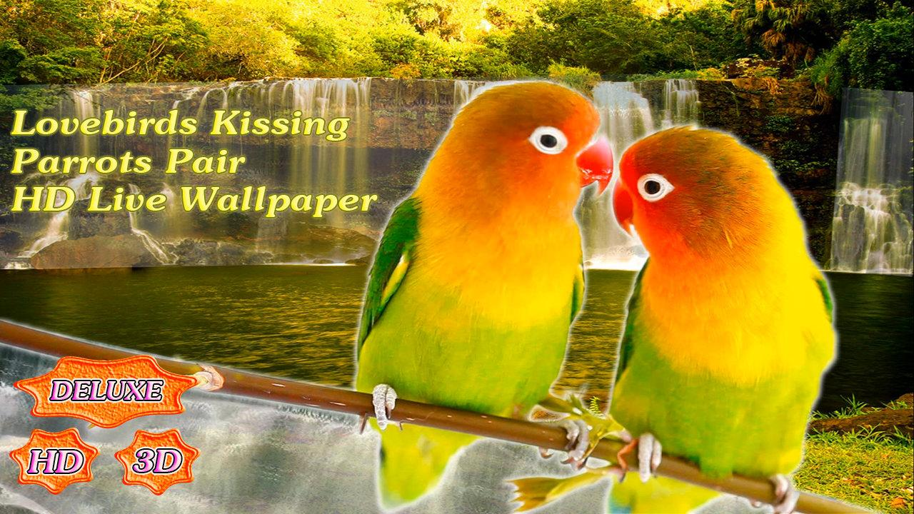 Parrots Kiss Love Wallpaper All Hd Wallpapers Gallery