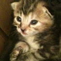 Cat kitten