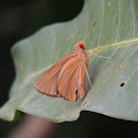 Common Red Eye