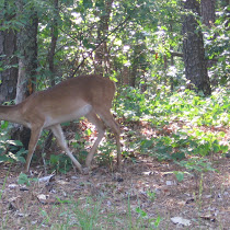 Wildlife at Red Top Mtn.