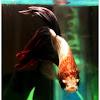 Betta - Siamese fighting fish