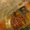 grass spider