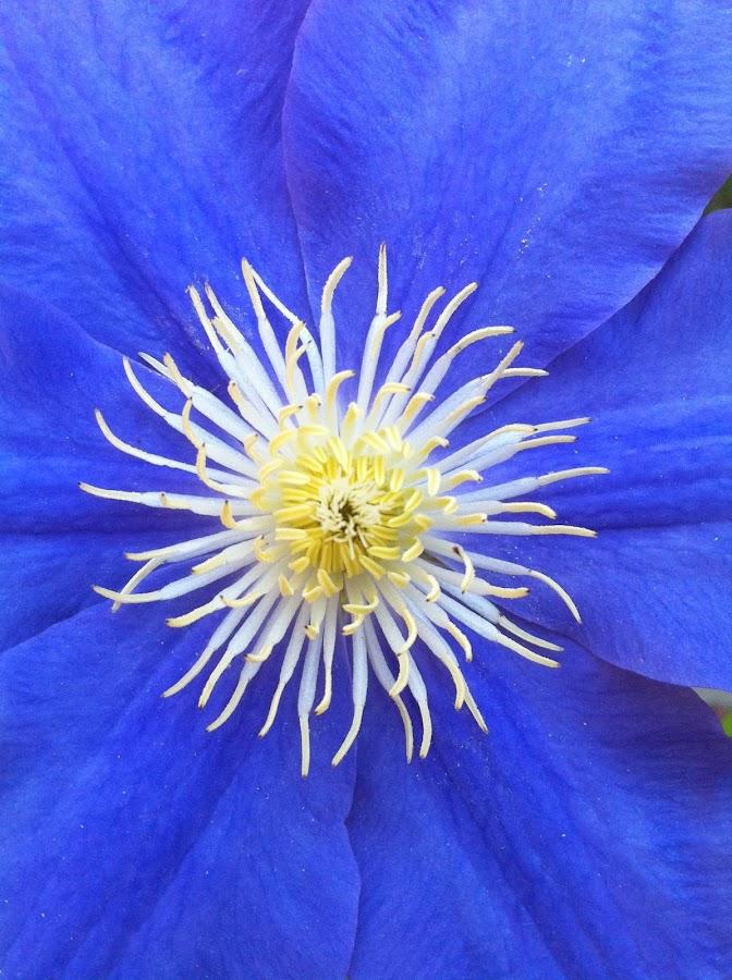 by Scott Huntermark - Flowers Single Flower