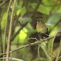 Female Tyrian Metaltail