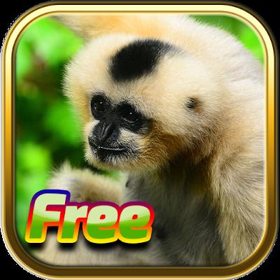Бесплатные игры животных